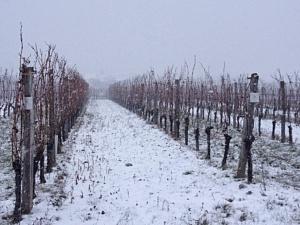 Parndorfas outlets Austrijā un Burgenlandes vīna reģions